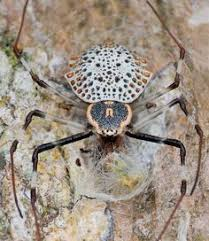 Decorative Spiders Fat Spider Yellow Stripes Scairt Of Piders U201d Embracing Myself