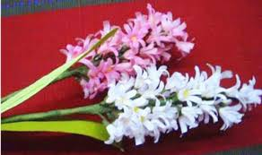 Hyacinth Flower How To Make Paper Flowers Hyacinth Flower 26 Youtube