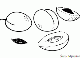 coloriage corbeille de fruits sans dépasser