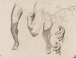 leg arm and hand study for architecture painting and sculpture