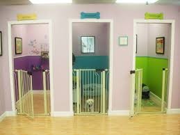pet room ideas 12 pet pering procedures spaces house and basements