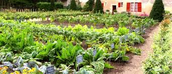 how to have an easier time starting your own garden austin open