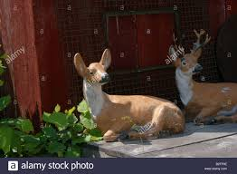 deer lawn ornaments sitting on a porch stock photo royalty free