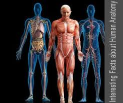 Human Quiz Quiz On Interesting Facts About Human Anatomy Human Body