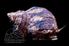 K Hen Vom Hersteller Kaufen Schnecken Einsiedler Seesterne Seeigel Krabben Und Mehr Online