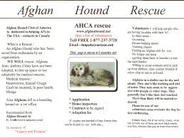 afghan hound rescue england resources afghan hound club of america u2013 national rescue