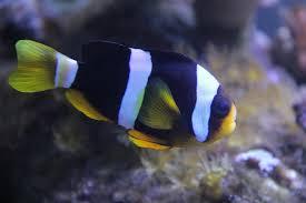 free images underwater blue coral reef close up macro