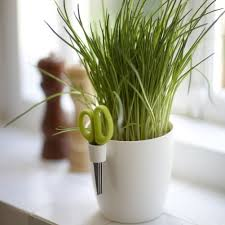 herbs planter herbs planting tips and gadgets