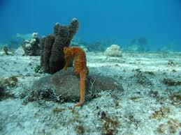 Texas snorkeling images Deep blue scuba web site jpg
