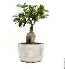 Buy Planters Buy A Pot Of Concrete For Plants Flowers Loft Style Grey