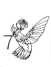 hummingbird clipart outline colorful cliparts suggest cliparts
