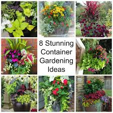 Ideas For Container Gardens - lovely plain container gardening ideas 11 easy colorful container
