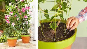 houseplant trellis flowerpot trellis