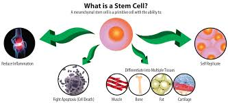 orthopedic stem cell therapy the san antonio orthopaedic group
