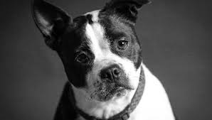 Are All Dogs Colour Blind Are Dogs Colorblind U2014 Tailslife Blog