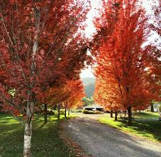 what a beautiful fall season a photoshoot brightly done