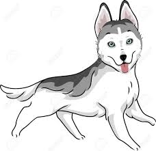 554 siberian husky puppy stock vector illustration and royalty