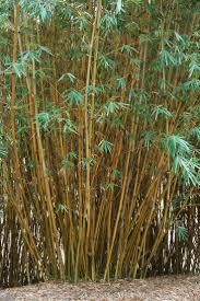 the most poisonous plants in australia hipages com au 42 best tropical plants close ups images on pinterest tropical