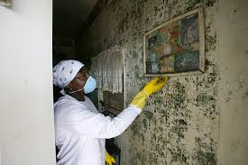 mold removal edmonton local mold inspection and abatement