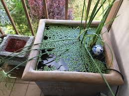 Ideas For A Small Backyard by Pretty And Small Backyard Fish Pond Ideas At Decor Landscape