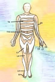 Nerves In The Knee Anatomy The Neurological Examination Dermatomes Myotomes Reflexes
