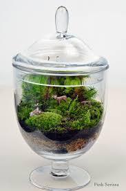 roosevelt u0027s terrariums in portland green terrariums pinterest