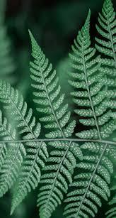 fern wallpaper background hd iphone wallpaper hd pinterest