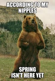 Gay Bear Meme - according to my nipples spring isn t here yet bear memes and