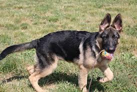 Canine Creature Comforts Creature Comfort Inn Canine Amenitiescanine Amenities Creature