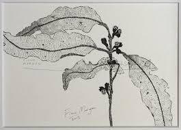 23 best botanical pen u0026 ink drawings images on pinterest
