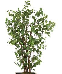 distinctive designs elm tree in pot reviews wayfair