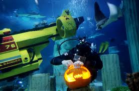 the spirit of halloween tpa quick take sea life aquarium dives into halloween with
