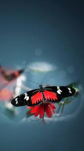 free download butterfly iphone wallpaper u2013 wallpapercraft