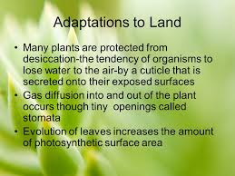 chapter 29 overview of plant diversity ppt video online download