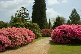 Beautiful Garden Pictures Pink Flowers Beautiful Garden Free Stock Photo Public Domain