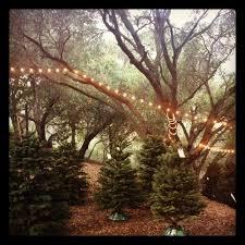 christmas tree lot ny city scenes pinterest christmas tree
