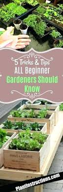 Garden Allotment Ideas Allotment And Vegetable Gardening Forum Brick Borders Allotment