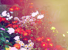 colorful flowers design colorful background wallpapers colorful