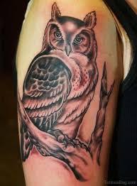 40 speechless owl on shoulder