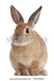 rabbit rabbit bunny rabbit stock images royalty free images vectors