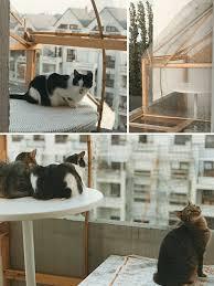 balkon katzensicher machen frankfurter katzenschutzverein absicherung für katzen in wohnung