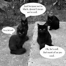 Evil Cat Meme - not all black cats are evil sort of meme humor memes com