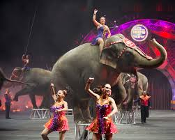 Barnes And Bailey Circus Ringling Bros And Barnum U0026 Bailey Built To Amaze Circus Ticket