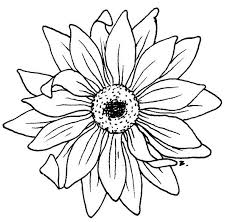 free black and white sunflower clipart image 8598 black and
