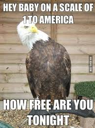 Murica Memes - 21 murica memes to keep your patriotism flowing