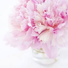 peonies flower pretty peonies and seasonal alternative flowers for your wedding