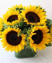 sunflower delivery boston ma sunflower arrangements design delivery