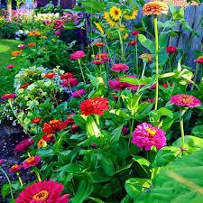 Spring Flower Garden Priscilla Parker Blain American Meadows In My Garden Zinnias