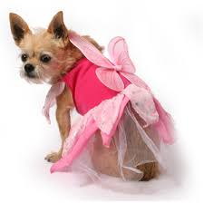 best halloween costumes for metrosexual dogs the muttropolis blog