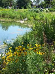 native pond plants lisle il